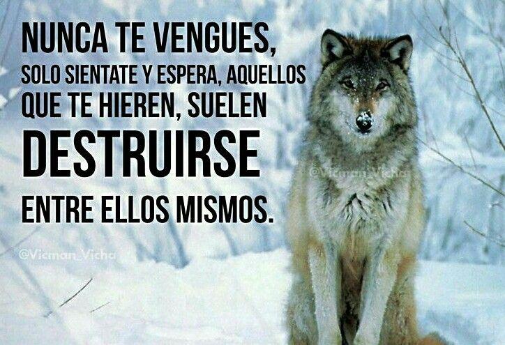 Imágenes De Un Lobo Con Frases Para Whatsapp Imagenes