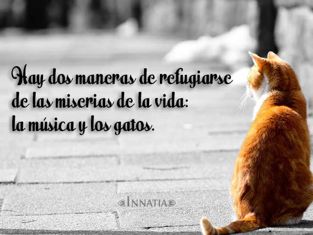 Imágenes De Gatos Graciosos Con Frases Imagenes Hermosas